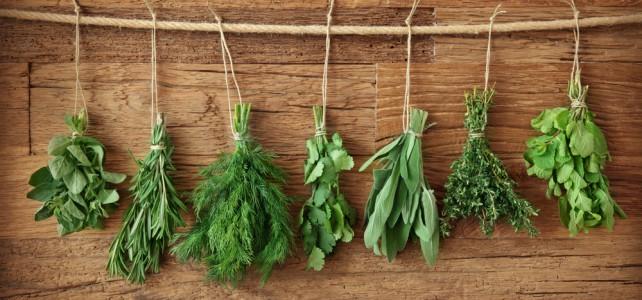 S Albertovou zahrádkou pěstujete nejen bylinky,  ale i zdraví svých dětí